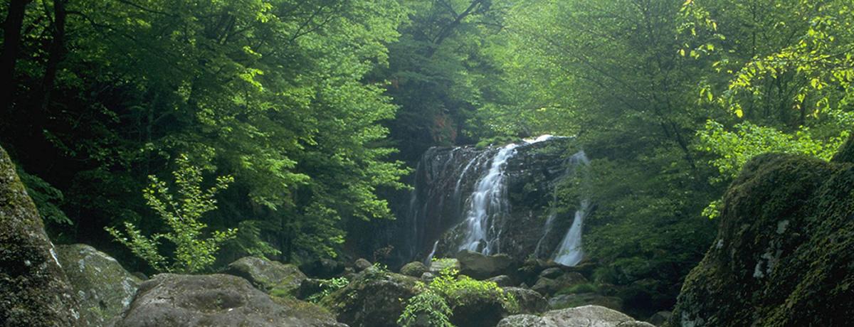 みんなのリサイクルで徳島県の森林づくり