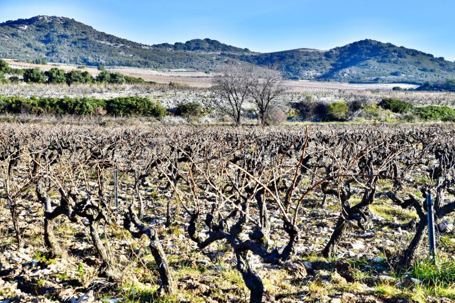 オーガニックワインの中でも最も厳しい基準のビオディナミ、自然の力を最大限に引き出し、ぶどうに力を与える農法です。