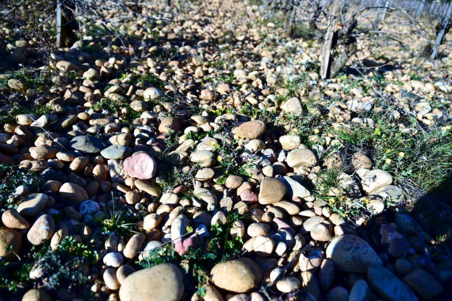 シャトーヌフデュパフのぶどう畑です。ローヌ河によって運ばれてきた大きな丸石が一面に広がっています。丸石のおかげで通気性と水はけがよくなっています。