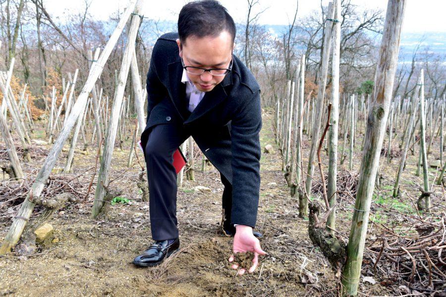 コンドリューのぶどう畑(真砂土)、世界最高のヴィオニエが栽培されています